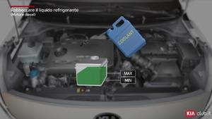 Rio - Rabboccare il liquido refrigerante [Motore diesel] (For Italy)